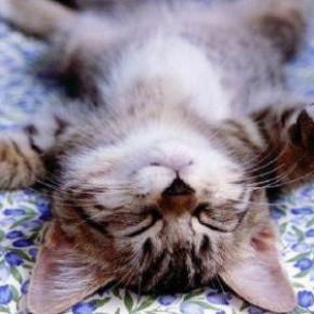 Сон продлевает жизнь