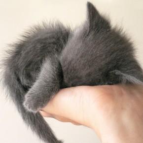 Итак, у вас появился котенок!