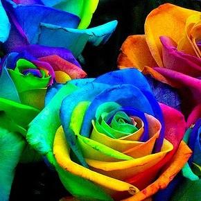 Все цвета радуги с Rainbow Roses