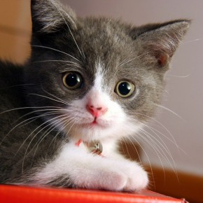 Картинки с изображением котят повышают работоспособность