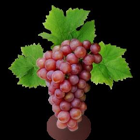 Красный виноград защищает сердце