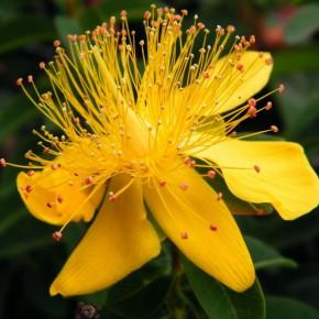 Травы и деревья для лечения дерматита