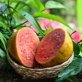 Гуава (guava) – что это за фрукт?