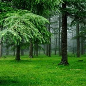 Деревья и поверья