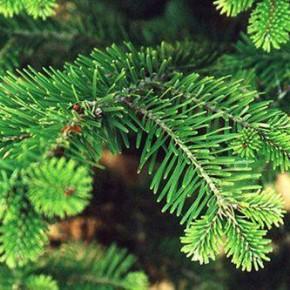 Как выбрать, донести до дома и установить живую новогоднюю елку