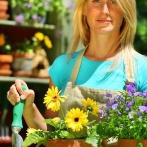 Познакомимся с некоторыми комнатными растениями, которые полезны для нашего здоровья