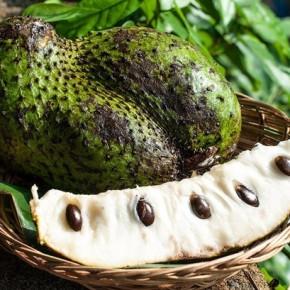 Сирсак (sirsak) – что это за фрукт?
