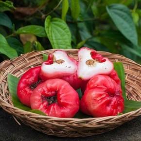 Чомпу (chomphu) или малайское яблоко