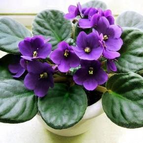 Чудо-раствор для самых безнадежных цветов