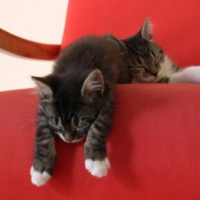 Эффективное средство от меток котов