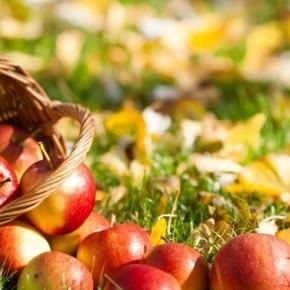 Яблоки. Пять положительных фактов
