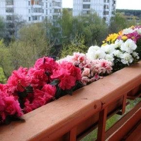 Какие комнатные растения можно держать на балконе зимой?