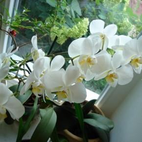 Какими методами победить болезни комнатных цветов?