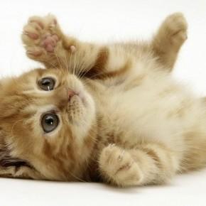 Как вылечиться с помощью кошки?