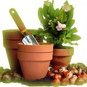 Как правильно ухаживать за комнатными растениями зимой?