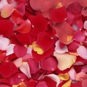 Как создать потрясающий цветочный запах в комнате?