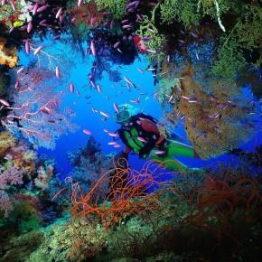 Красота тихоокеанского архипелага Феникс