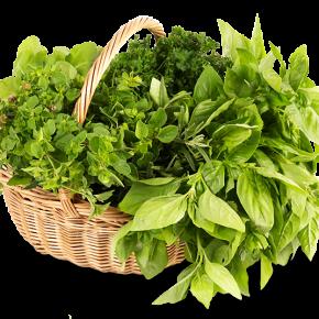 Домашний огород – полезное семейное хобби