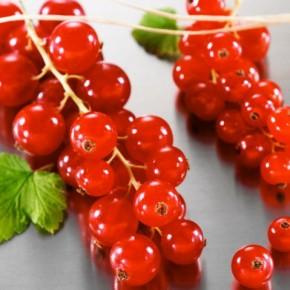 Ягода здоровья – красная смородина