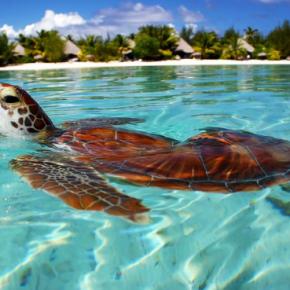 Остров Бора Бора в Тихом океане - удивительно красивое место на Земле