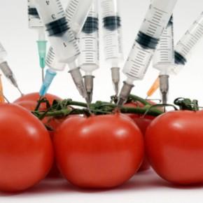 Что такое ГМО и как это работает?