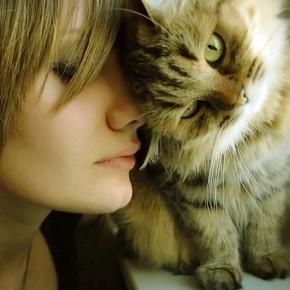 Лекарь человека: кошки лечат людей?