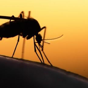 11 средств от комаров: что работает, а что нет?